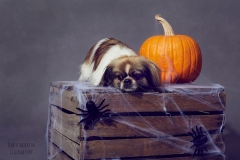 Halloween, Dog
