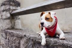 Hund, Hall in Tirol, Altstadt